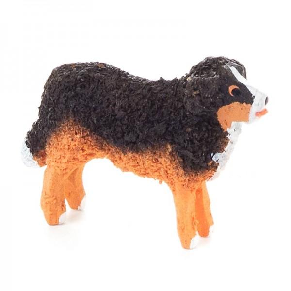Dregeno Erzgebirge - Miniatur-Berner Sennenhund
