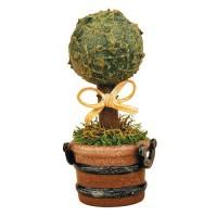 Hubrig Buchsbaum